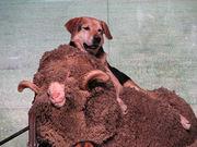 羊が一匹、羊が二匹…。