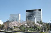 上智大学★2012☆入学予定