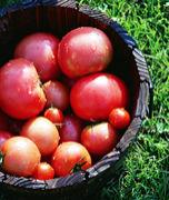 """トマトの""""つう""""になりたい。"""