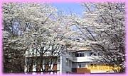 ★奈良学園第28回生★
