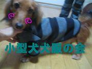 ♫小型犬服の会♬