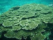 近畿の海で素潜り・魚突き