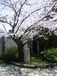京都市立紫野高校 陸上競技部