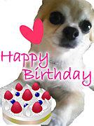 ペットだって誕生日祝いしたい!