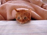 エアコン付けて毛布でござる。