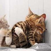 たくさんの猫と同居中!!