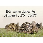 1987年8月23日生まれの輪