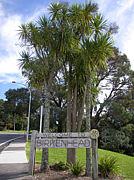 Birkenhead (バーケンヘッド)
