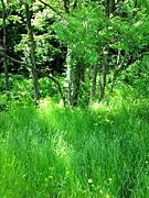 森林の香り