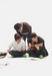 04AP☆family