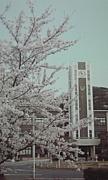 岡山大学 平成21年度入学生