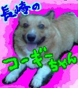 長崎のコーギーちゃん!♡
