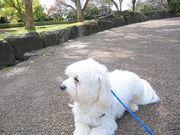 関東エリア版 犬と散歩しよう♪