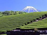 静岡中部西部でワイワイ