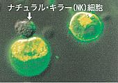 ナチュラルキラー細胞