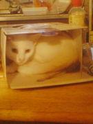 可愛い変なクセの猫が好き♪