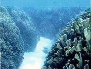 サンゴ礁の生態系