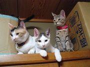 おとな猫が好き!!!