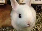 好きな人がみんなウサギに見える