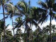 ヤシの木のある風景