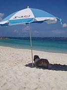 犬と行く沖縄旅行♪