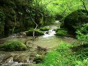 滋賀の渓流釣りが好きで止まない