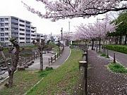 千里川ランニングクラブ(SRC)
