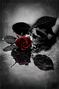 ゚ο。*+Black Rose+*゚ο。