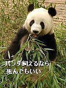 パンダ飼えるなら死んでもいい