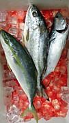宮崎のいろいろな釣りポイント