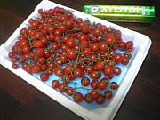 トマトが大好き!