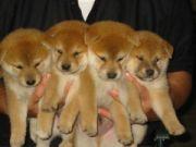 奈良で犬好き集まれ
