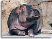 チーム hippopotamus