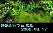 熱帯魚ライフ in 広島