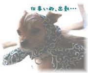 コソドロ顔の犬・盗賊団への野望