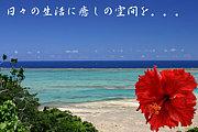 沖縄大好き〜神奈川県在住限定