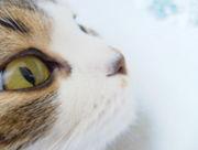 猫愛(キャッツ・アイ)
