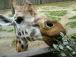 今後の動物園を考える会