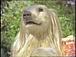コンソメパンチのCMの犬が好き
