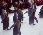 ペンギンは、好きですか?