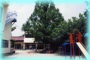 マクリン幼稚園