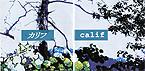 カリフ -calif-