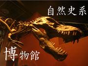 自然史系博物館