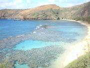 ハワイに留学☆