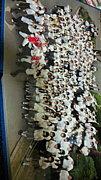 2011年度  白河高校卒業生