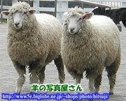 久留米羊会(1967WOOLin久留米)