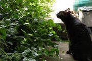 ふわふわの黒猫