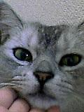 猫飼いの苦悩