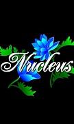 -Nucleus-