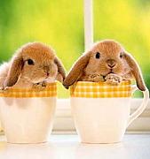 ウサギの心(^o^;)